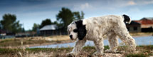 report a lost animal to the ispca