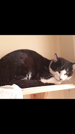 Black & White cat found Castleknock