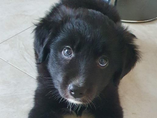 ISPCA Ireland - Irish SPCA - Animal Charity - Rescue Dogs