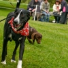 Scruffs Dog Show in Aid of the ISPCA