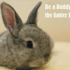 Be a Buddy to the Easter Bunny