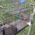 Carlow Men Convicted of Trapping Wild Birds