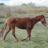 Another Horse Taken into the Care of the ISPCA