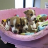 Pups With Docked Tails Rescued by ISPCA