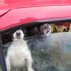 ISPCA Rescues Dogs Housed in Cars