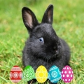 Easter Pet Care