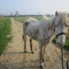 Grey Mare Discovered in Shocking Condition