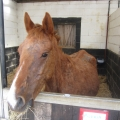 Wicklow man pleaded guilty to cruelty to horses