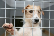 Your support of the ISPCA Raffle will help us relieve animal suffering in Ireland.