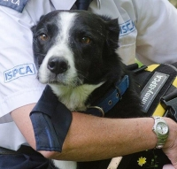 ISPCA launch Coronavirus Emergency Appeal