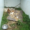 Cork property had 24 dogs living in terrible conditions