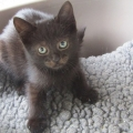 The ISPCA is appealing for new homes for a number of rescued cats and kittens