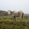 Grey Mare Rescued from North West Cork