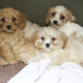 More puppies seized at Cairnryan Ferry Port
