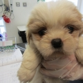 ISPCA calls for a crackdown on illegal behaviour by puppy farmers after 20 puppies were seized