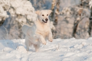 Animals at Risk Due to Cold Snap