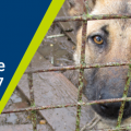 ISPCA receive over 69,000 calls to national animal cruelty helpline