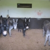 More Donkeys in need of ISPCA Assistance