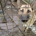 Tipperary man convicted of cruelty for keeping dogs in appalling conditions