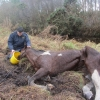 Abandoned Horse Condition Limited Chances of Survival