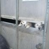 ISPCA uncovers case of dog hoarding