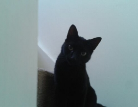 Small Black Cat Missing from Ballycullen D24