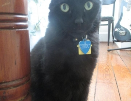 Nick, our black cat, is lost in Tralee