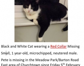 Black and white male cat - Churchtown