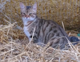 Lost Cat Co.Wexford