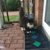 Found Black & White Female Cat in Midleton