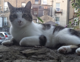 Lost Cat Ballsbridge