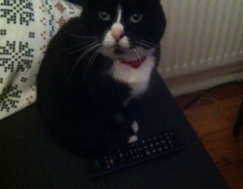 Lost B&W Cat - Parnell Road