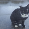 Black cat with some white markings found 6th Jan 2017