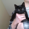 kitten found in Blanchardstown (d15)