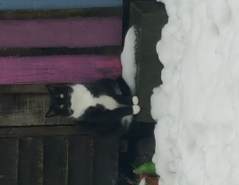 Black/white cat missing from Crumlin