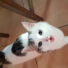 Young cat-
