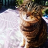 MISSING CAT - DUBLIN 5: