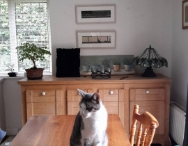 Lui, white and grey male cat missing in Killiney