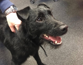 Male Pup found in Cork City, Union Quay