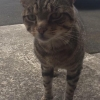 Found this cat 5 month ago in Nenagh