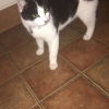 Unknown-Cat found in Killeen area