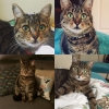 Tinchy missing from Stoneybatter