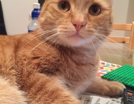 Lost ginger cat Richie