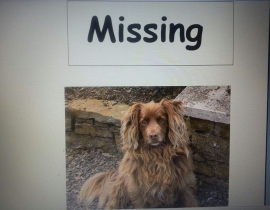 Missing from Freemount, Co. Cork