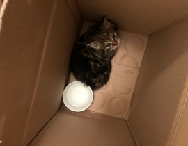 Kitten found in Dunfanaghy near the workhouse