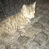 Cat Found by Milltown Luas Stop