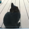 Young pure black cat found in Kilbarrack