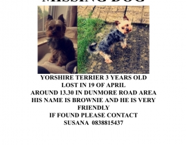 Lost Yorkshire Terrier around Dunmore Road Area , Waterford