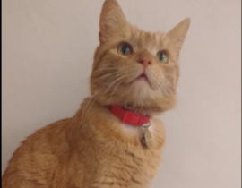 Ginger Cat lost from 31 Fairview Strand, Fairview, Dublin 3 on Saturday 23/06/18