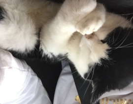 Black and white cat missing